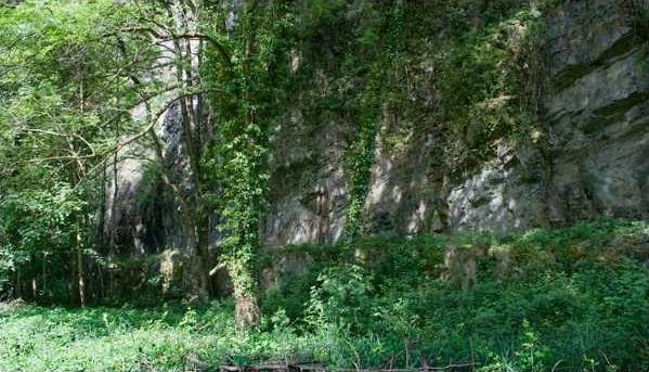 Voie de Rochetaillée camouflée par la végétation