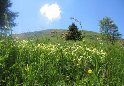 Sentier découverte au Col d'Ornon